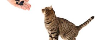 Активированный уголь для кота