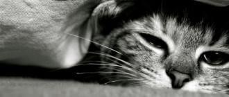 Питание кошки после отравления