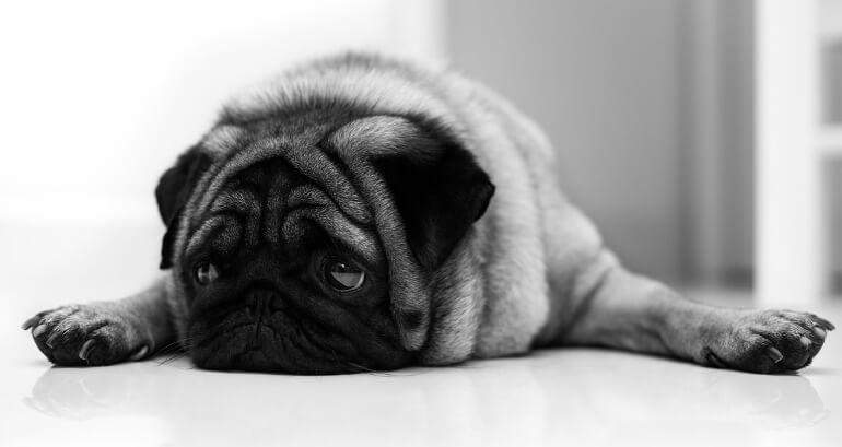 Питание собаки после отравления