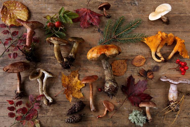 Польза и вред от употребления грибов