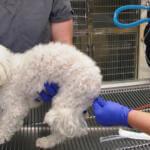 Как поставить клизму собаке