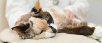 Симптомы отравления кошки крысиным ядом