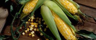 Причины отравления кукурузой