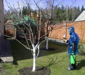 Обработка деревьев медным купоросом