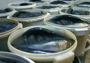 Причины отравления соленой рыбой