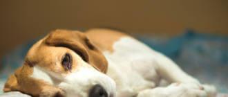 Причины поноса и рвоты у собаки