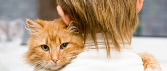 Как промыть желудок кошке