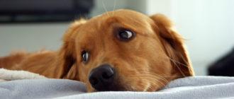 Как сделать промывания желудка собаке дома
