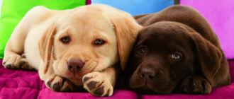 Причины рвоты у щенка
