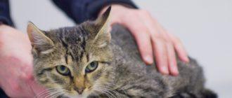 Причины салмонеллеза у кошек