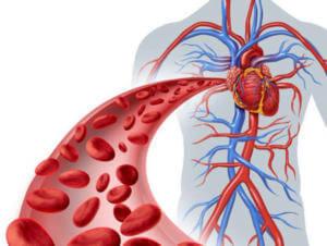 Улучшение церкуляции крови после семян льна