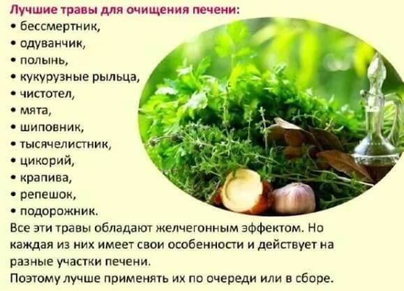 Лучшие травы для очищения печени