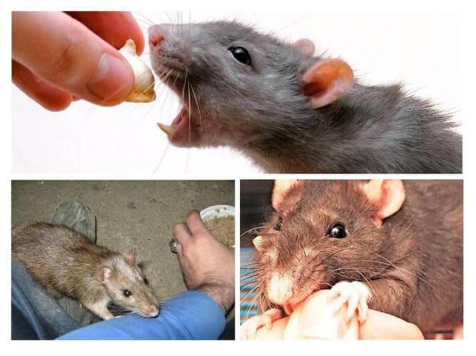 Если вы увидели во сне летучих мышей — это очень нехороший сон, к печали, плохой вести, неприятности, вору в доме.
