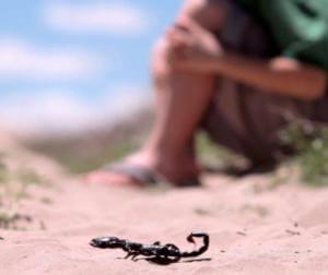 Меры предосторожности от укуса скорпиона