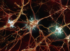 Разрушение нейронных связей после наркоза