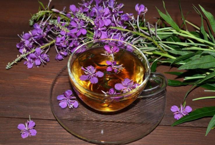 Влияние иван-чая на организм человека