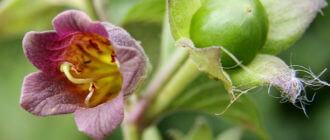Интоксикация ядовитыми растениями