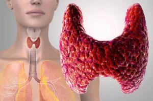 Польза желатина для щитовидной железы
